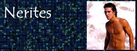 Nerites